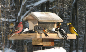 the image shows birds sitting on a bird house in the snow.